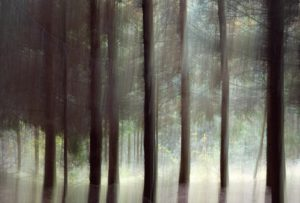 Hans-Keijzer-in-het-bos